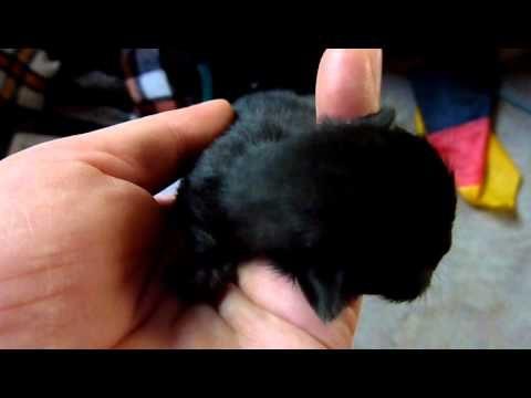 2011 – Katzenbaby schwarz