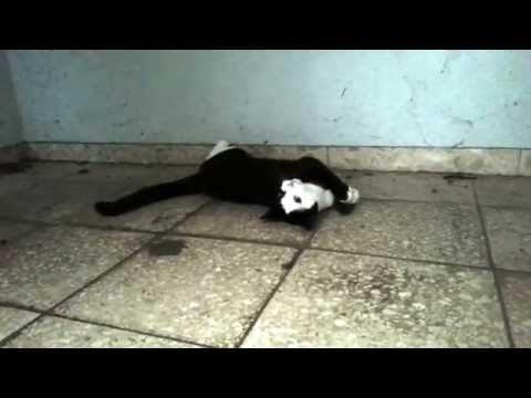 Bibi – Katze spielt mit Maus