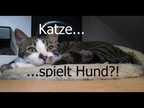 Crazy Cat´s : Katze(n) – Süße Verrückte Katze spielt Hund…