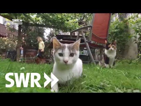 Das geheime Leben der Katzen gezeigt im SWR