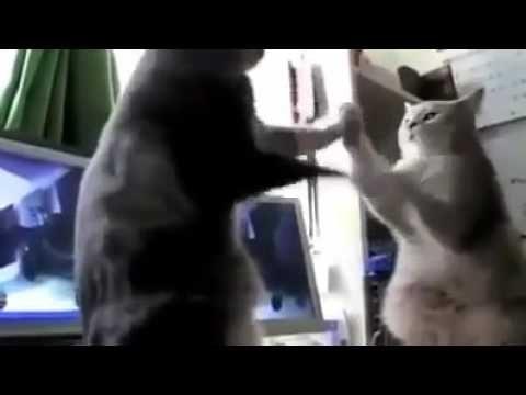 Die sprechende Katzen