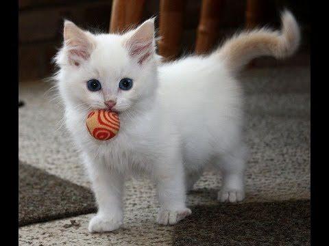 Dokumentation : Katzen in Haus und Garten