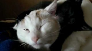 fast schlafende Katze