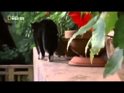 Faszination Katzen – Eine Dokumentation auf deutsch