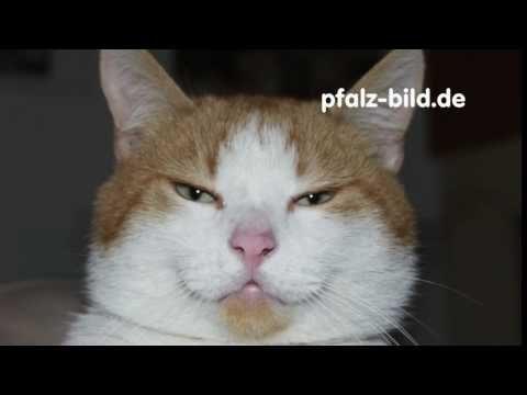 Hoer Bild – Katzenjammer – Zwei Katzen fauchen sich an !