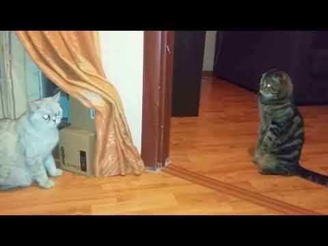 Kater sieht Katze zum ersten mal