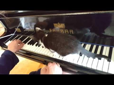 """Katze Riki """" spielt"""" Klavier…😺"""