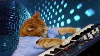 Katze spielt Klavier!