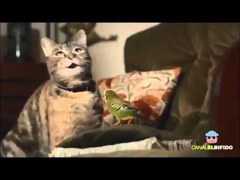 Katze spielt Klavier