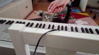 klavierspielende katze nora