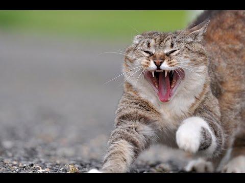 Böse Katzen