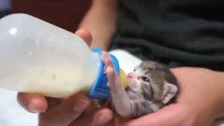 Katzen Miauen Katzentube