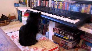 luma spielt klavier.MOV