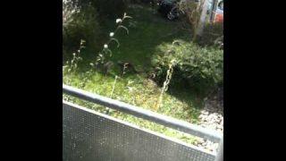 Lustige Katzen jammern im Garten
