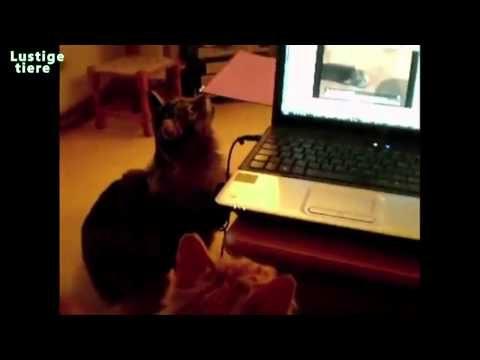 Lustige Katzen Miauen Katzen reagieren auf Video [HD Video]