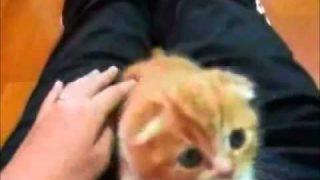 Die Sprechende Katzen Katzentube