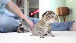 Mega süße Katzenbabys