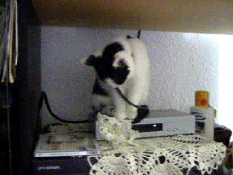 Schlafende Katze ***LOL***