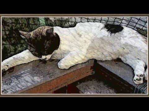 Schlafende süße Katzen
