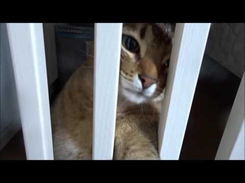 Sprechende Katzen / Katze Molly jammert: Ich will raus!