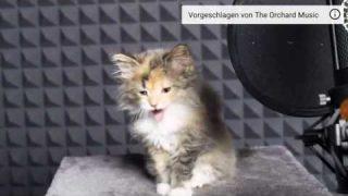 Süße babykatzen singen 😻