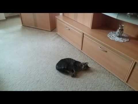 Willige Katze
