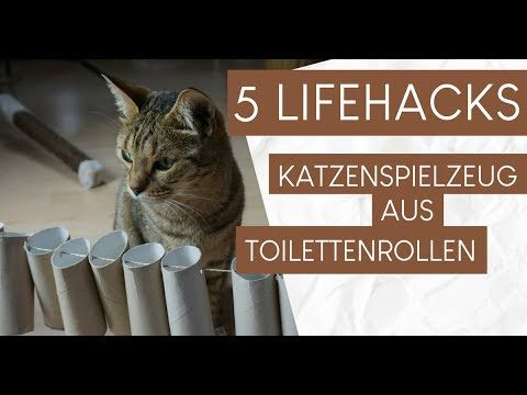 5 Hacks: Katzenspielzeug aus Klopapierrollen basteln – DIY Katzenspiezeug