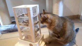 Intelligenzspielzeug Archives Katzentube