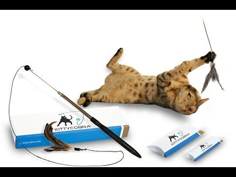 Kittycobra | Die clevere Katzenangel
