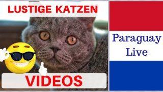 Das Geheime Leben Der Katzen Gezeigt Im Swr Katzentube