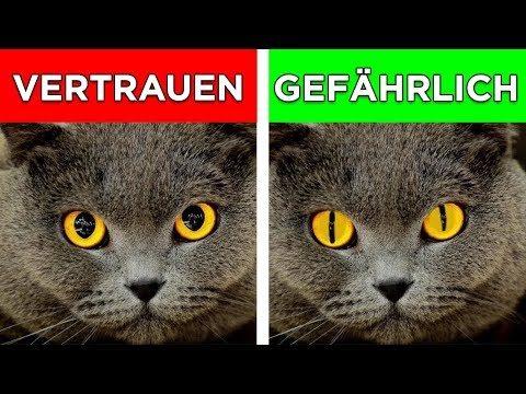 7 Katzen Signale und was sie bedeuten! Katzen richtig verstehen