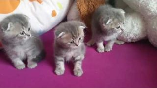 Böse Katze erschreckt Baby Kätzchen