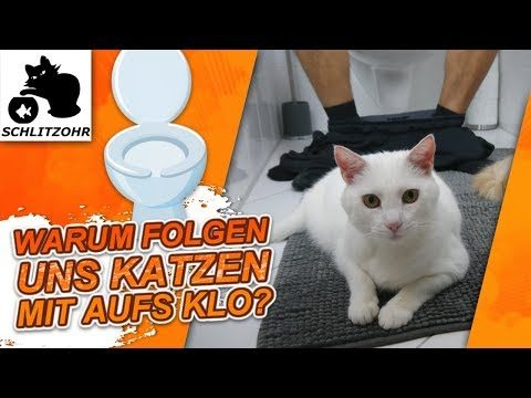 🔥Warum folgen uns Katzen aufs Klo? | Lustiges Katzenverhalten