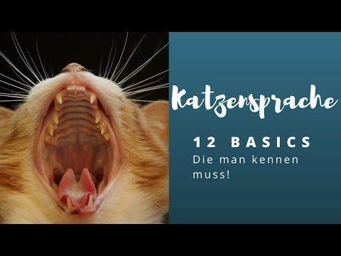 Katzensprache lernen – Die 12 wichtigsten Basics!