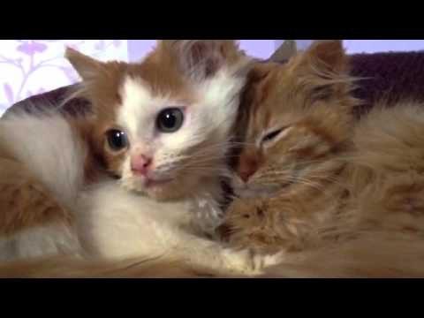 katzensprache, was bedeuten Katzenlaute?
