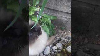 Playtime für die Katzen