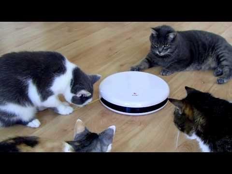 Erfahrungen mit FroliCat™ FLIK™ automatisches Katzenspielzeug, Teil 1