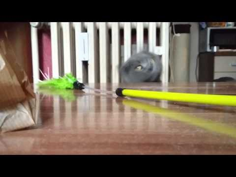 Grüne Katzenangel