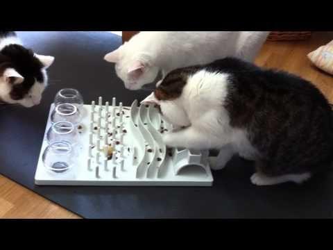 Katzenbeschäftigung – drei Katzen mit ihrem Katzenspielzeug