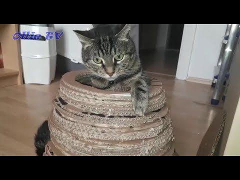Katzenhöhle aus Karton selber bauen . Ganz einfach .