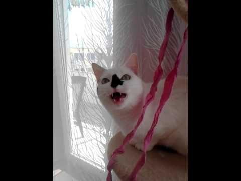 lustige Katzenlaute richtig deuten