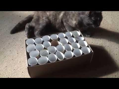 Diy Katzenspielzeug Selber Basteln Katzentube