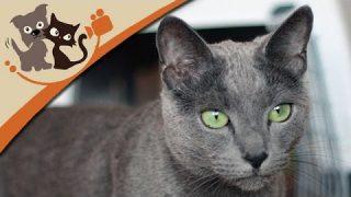 Katzenhaltung und Pflege (Doku)