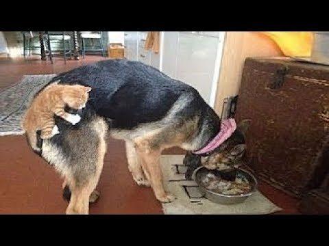 HAUSTIERE zum Knuddeln!😍 Süße Hunde & Katzen Videos🐶🐱!  Vol.1