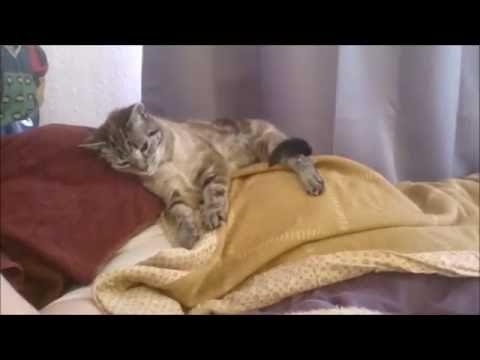 Katze lässt mich nicht schlafen