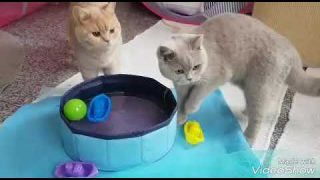 Katzen spielen mit Wasser