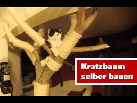 Katzenbaum selber bauen aus Naturholz | Kratzbaum selber bauen