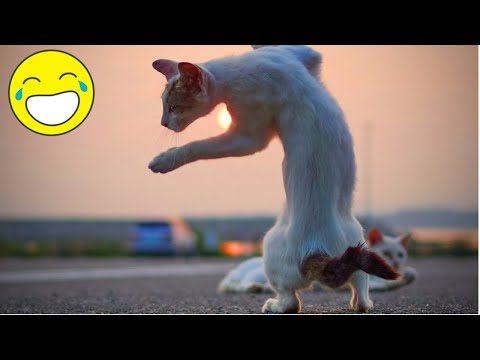Lustige Katzen 😍 Beste lustige Katzen und Hunde 2019.Katze schlägt fehl😍Lustige Haustiere 💜#6