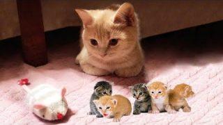 Lustige Katzen Videos 1 Katzentube