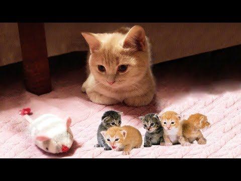 Lustige Katzenvideos – Jeden Tag Unterhaltungs Videos